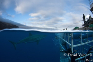 Guadalupe island and a look at the entire operation. by David Valencia 